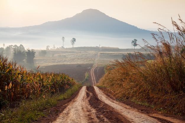Chemin de terre menant à travers la forêt au début du printemps par un matin brumeux