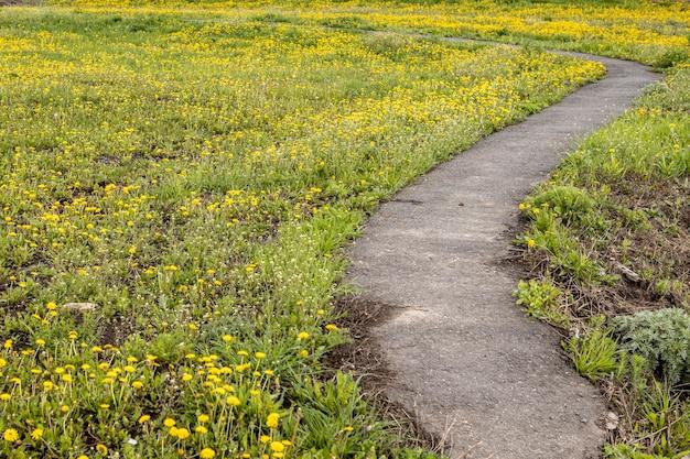 Un chemin de terre non pavé traverse une belle prairie et des arbres