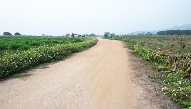 Chemin de terre rural et herbe des deux côtés de la route. chemin dans les champs ruraux.