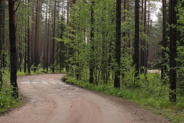 Un chemin de terre sinueux dans une forêt de pins en été.