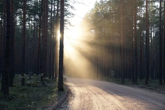 Un chemin de terre sinueux, éclairé par les rayons du soleil couchant sur la gauche.