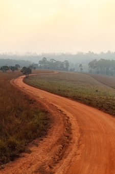 Chemin de terre traversant la forêt au début du printemps par un matin brumeux