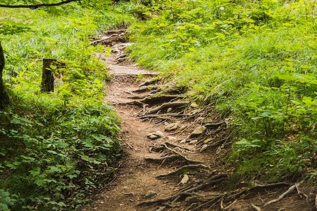Chemin à travers une belle forêt automnale