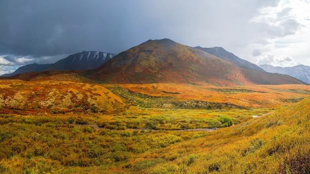 Le chemin à travers le bouleau nain (betula nana) en automne. paysages lumineux de montagnes et de forêts d'automne de la région de l'altaï, en sibérie. vue panoramique.