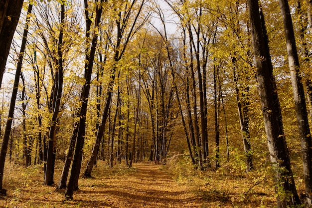 Chemin à travers la forêt d'automne