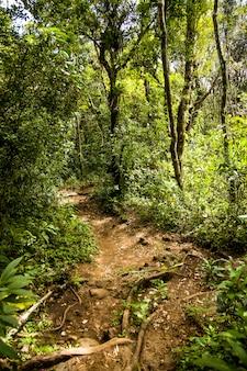 Chemin à travers une forêt tropicale humide