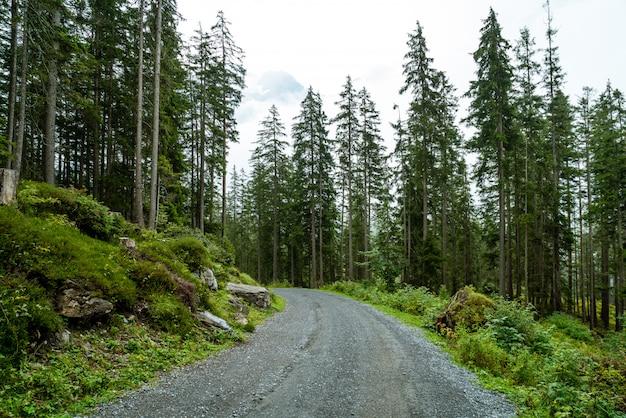 Chemin vide avec forêt et brumeux