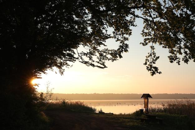 Chêne sur fond d'un champ de céréales au lever du soleil