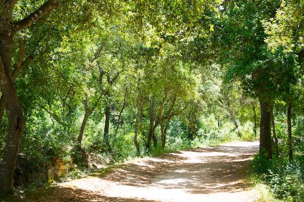 Chênes de la forêt de minorque à cala en turqueta ciudadela