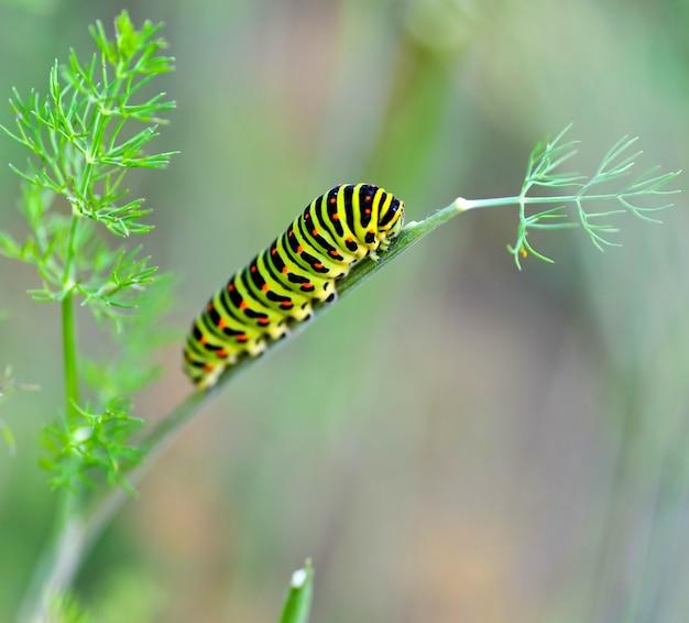Chenille verte sur une tige