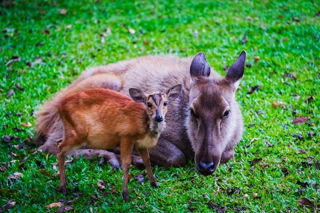 Cher et bébé mignon cher sur l'herbe