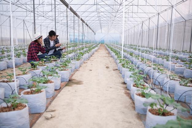 Chercheur agricole avec la tablette inspecter lentement les plantes.