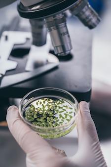 Chercheur végétal travaillant en laboratoire