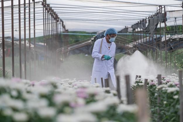 Des chercheurs de sexe masculin injectent de l'engrais dans des parcelles d'expérimentation de chrysanthème