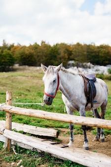 Un cheval blanc dans un enclos en bois à l'extérieur d'une ferme