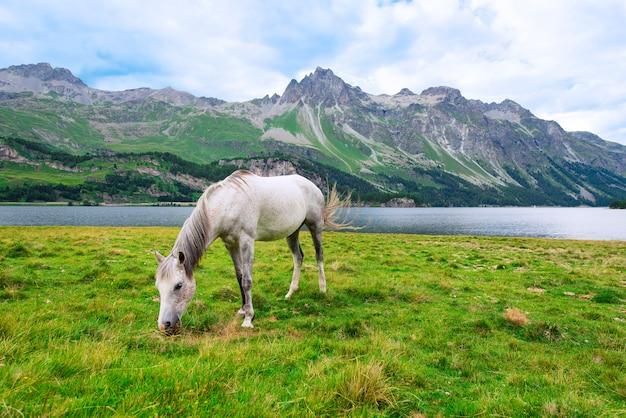 Cheval blanc dans une grande prairie près d'un lac dans les montagnes