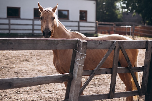 Cheval Brun Au Ranch Photo gratuit