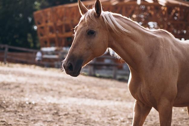 Cheval brun au ranch