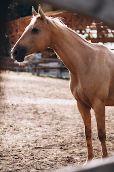 Cheval brun au ranch