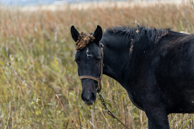 Un cheval brun broute dans un pré sur fond de lac. le pâturage des chevaux