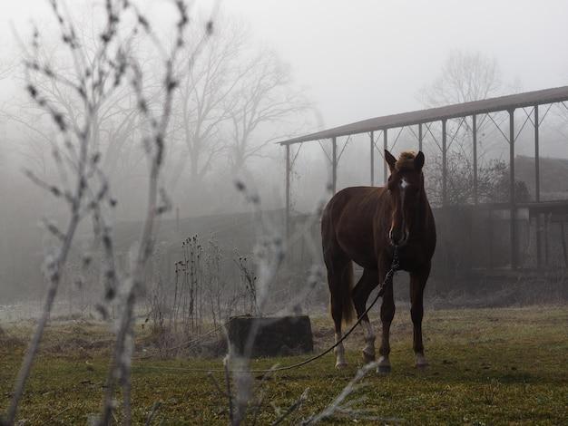 Cheval brun dans le pré au crépuscule