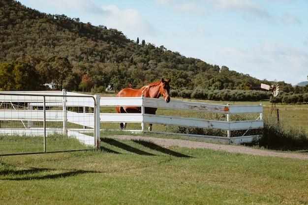 Cheval brun debout derrière une clôture en bois dans une ferme