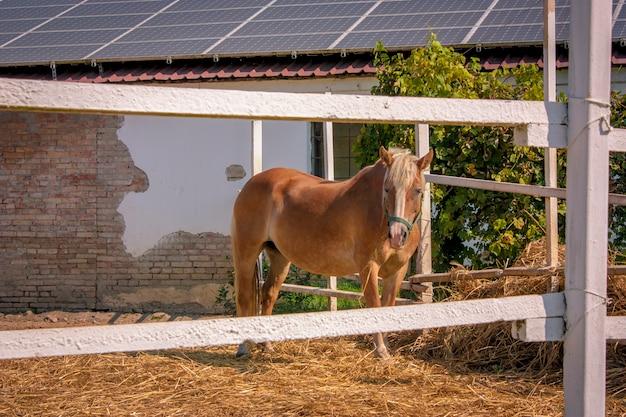 Cheval brun enfermé dans une clôture à l'intérieur d'une ferme en italie