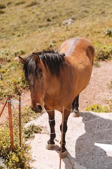 Cheval brun à la ferme