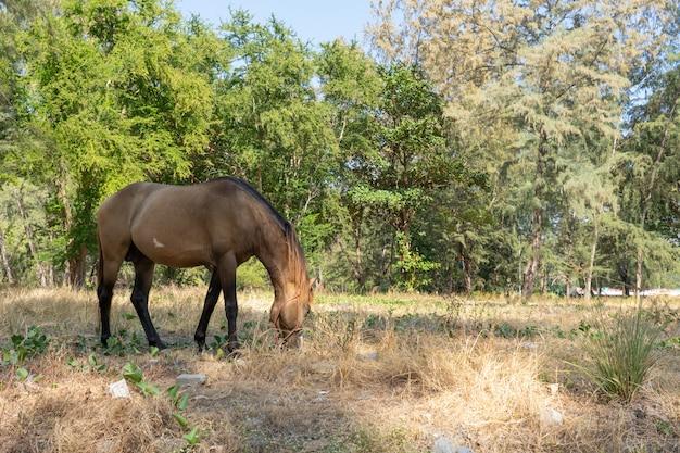 Cheval brun mangeant de l'herbe