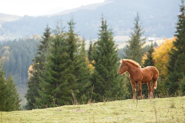 Cheval brun paissant sur la pelouse sur fond de montagnes
