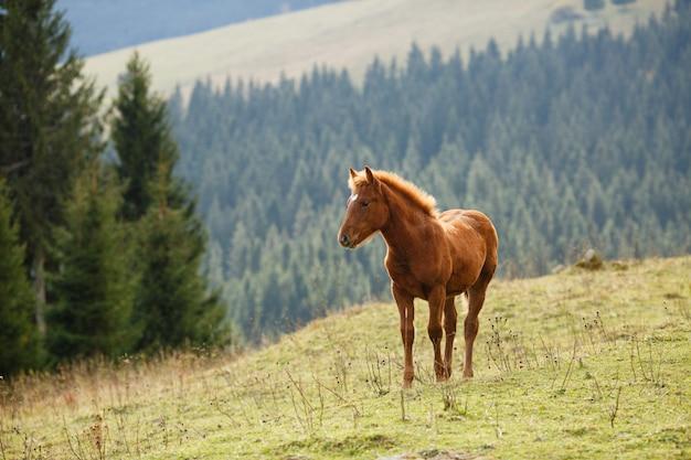 Cheval brun paissant sur la pelouse sur un fond de montagnes