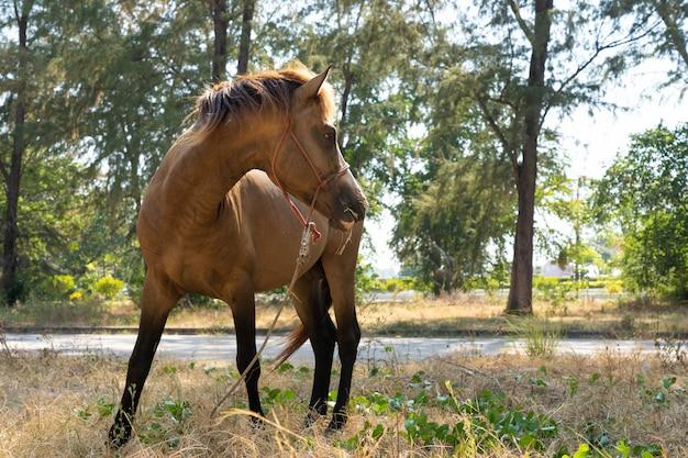 Cheval brun stable sur herbe sèche