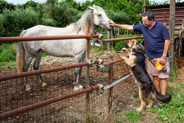 Cheval chien et homme