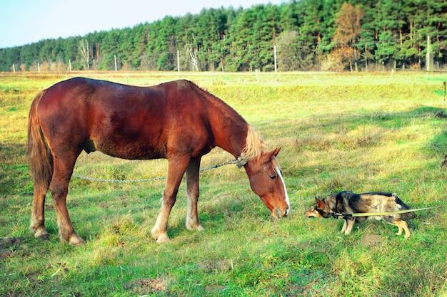 Cheval et chien se reniflent