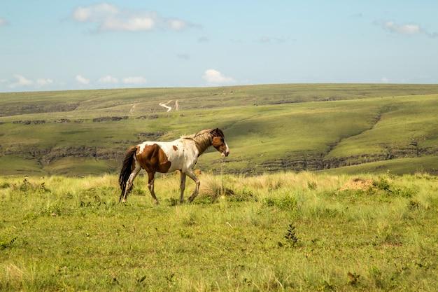 Cheval, dans, montain parc national, brésil