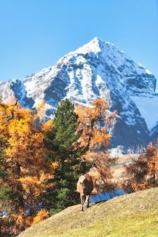 Un cheval dans un paysage d'automne de haute montagne sur les alpes suisses