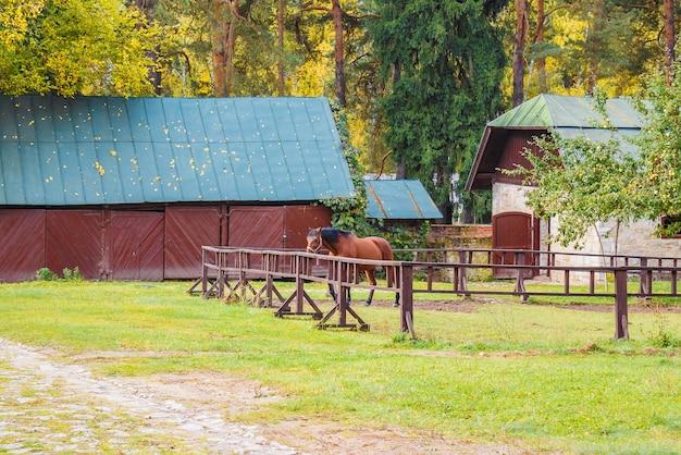 Cheval dans la stalle dans la forêt