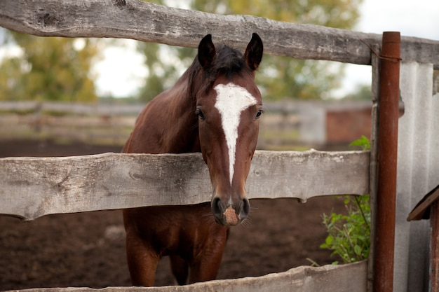 Un cheval debout derrière une vieille clôture en bois dans une ferme équestre