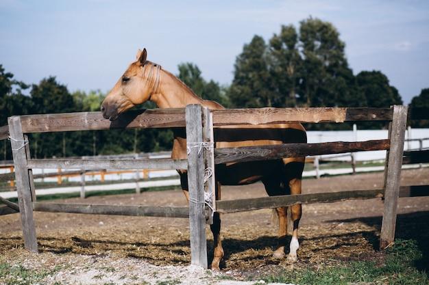 Cheval derrière la clôture