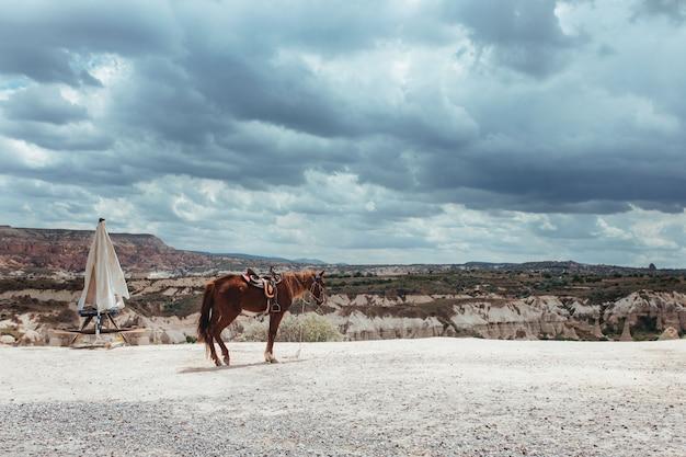 Cheval fatigué des touristes dans la vallée de l'amour