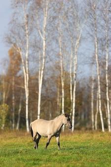 Un cheval gris marche sur un champ vert