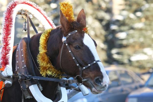 Cheval en harnais avec décoration de noël