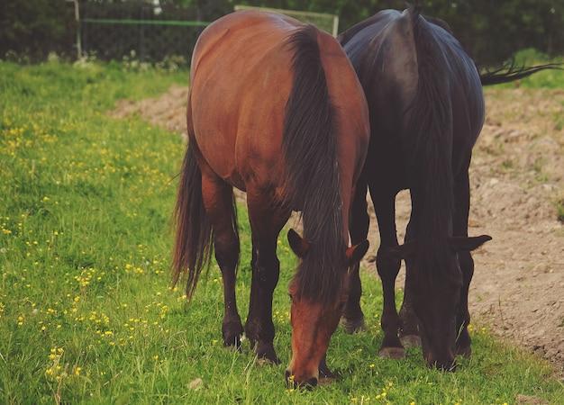 Un cheval sur l'herbe, l'heure d'été