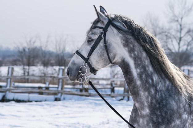 Cheval en hiver dans la neige en dehors de la ville dans un champ