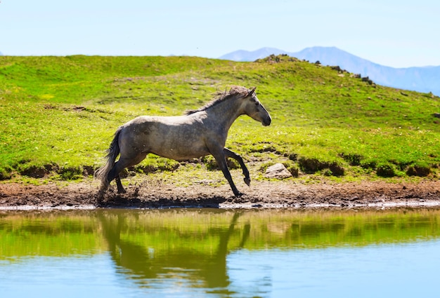 Cheval sur le lac dans les montagnes