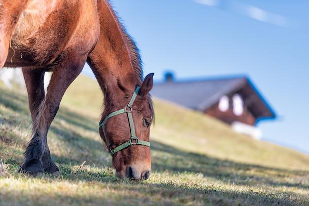 Un cheval mange dans le pré près de la ferme