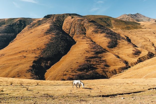 Le cheval mange de l'herbe jaune séchée sur la colline avec la montagne en arrière-plan.