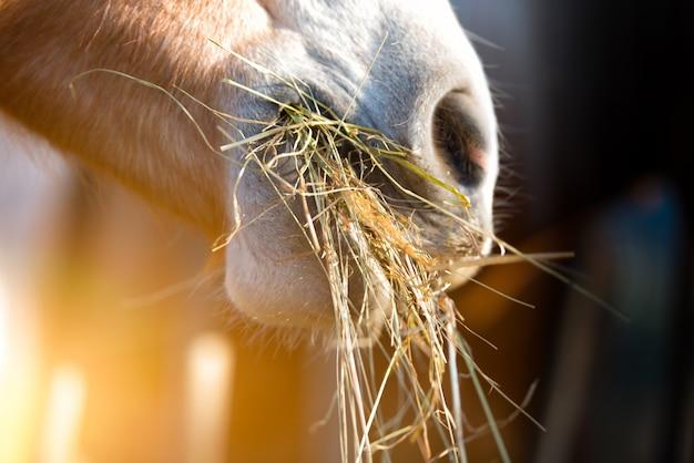 Cheval mange de l'herbe