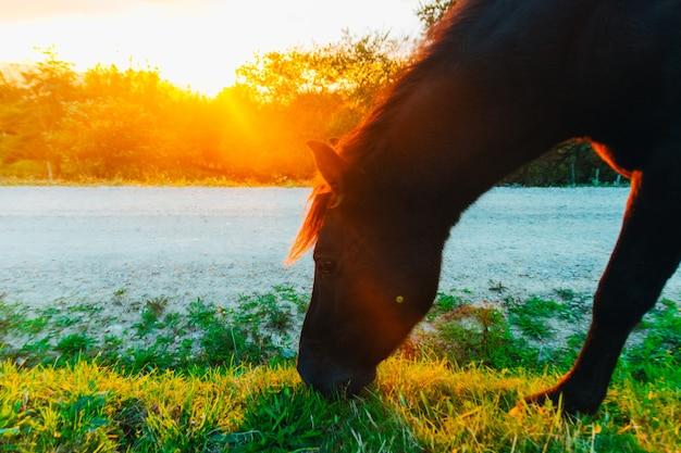 Cheval mangeant de l'herbe sur un pâturage. animaux des terres agricoles