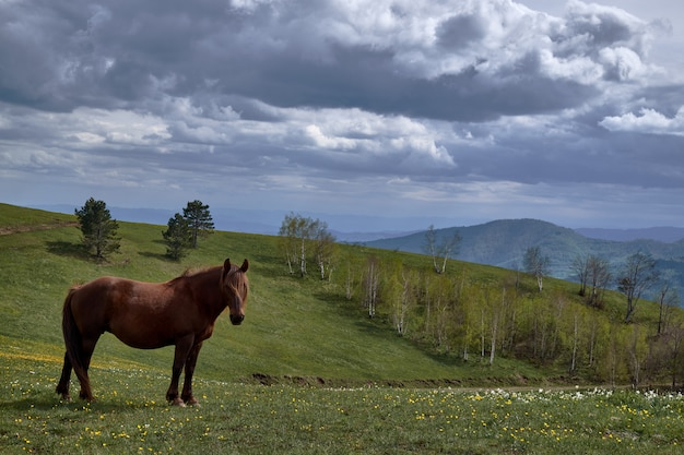 Cheval mignon traîner au milieu d'un paysage montagneux sous le ciel clair
